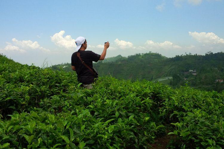 Kebun teh Kemuning di Kecamatan Ngargoyoso, Karanganyar, Jawa Tengah, Selasa (26/2/2019).