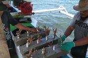 Pasca-Tsunami, Nelayan Benahi Pesisir Pantai dengan Transplantasi Terumbu Karang