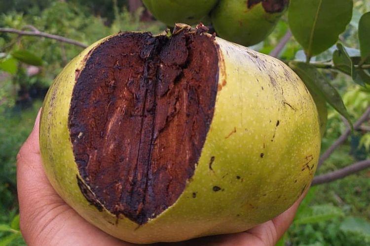 Black sapote, buah asal Meksiko yang memiliki rasa mirip puding coklat.