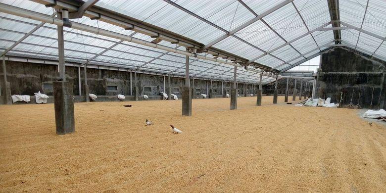 Nusa Tenggara Barat berhasil menghasilkan 6.000 ton benih padi bersertifikat secara mandiri melalui program pengembangan perbenihan tanaman pangan berbasis korporasi yang dicanangkan oleh pemerintah.