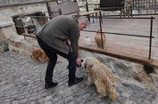 Pencinta Kucing dan Anjing, Coba Liburan ke Turki Deh...