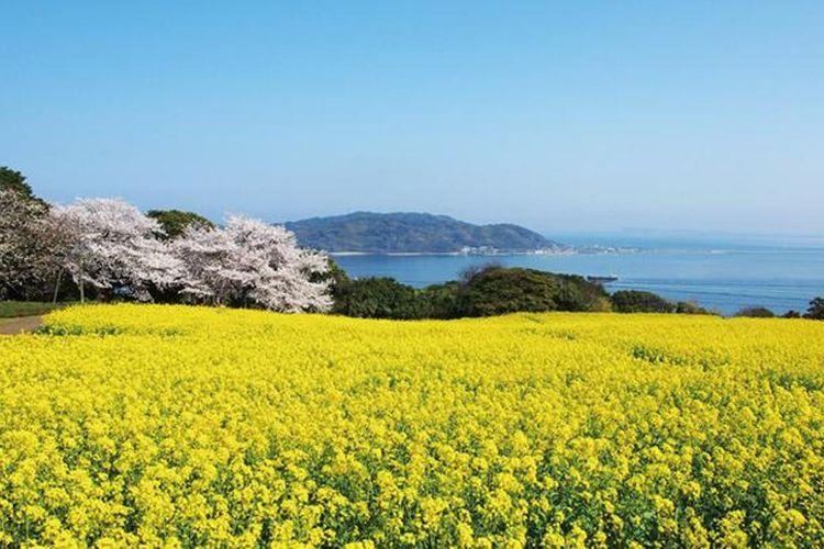 Warna kuning dan merah muda sakura berpadu dengan laut genkai-nada berwarna biru tua.
