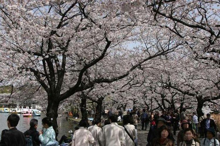 """""""Ueno Onshi Park"""" yang dipenuhi 3 Juta lebih pengunjung, event spesial tahun ini adalah mencoba pengalaman menjadi konduktor orkestra."""