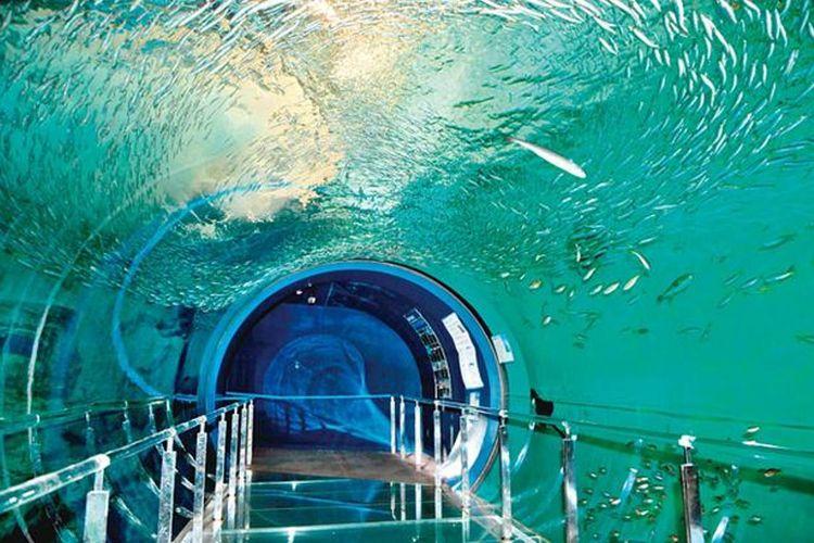 Ada beragam atraksi di Shimonoseki City Aquarium Kaikyokan