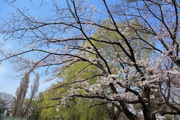 Taman Takiyama