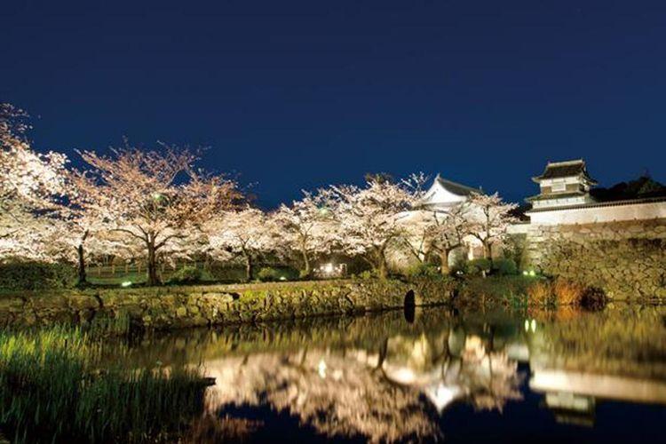 Festival Sakura terbesar di Fukuoka yang memuaskan baik dinikmati pada siang maupun malam hari