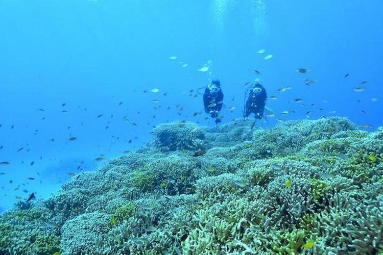 Lebih dekat dengan terumbu karang