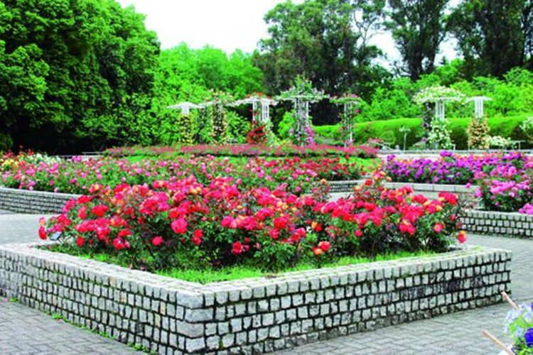 Taman mawar di area taman botani dipenuhi mawar penuh warna.
