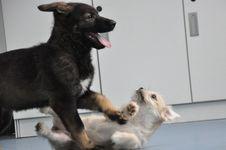 Ikuti Jejak KorSel, China Gunakan Anjing Kloning sebagai Hewan Pelacak