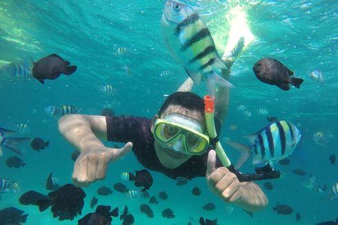 Sensasi Berenang Bersama Ikan Nemo di Sabang…