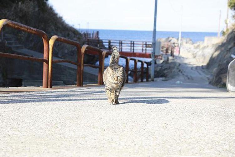 Pada pagi hari, mereka kadang-kadang berjalan-jalan di pinggir laut.