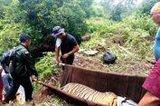 Dievakuasi, Harimau Sumatera yang Terjerat di Riau Dipikul dengan Tandu Sambil Diinfus