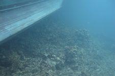 Kesehatan Laut Indonesia Diperiksa, Bagaimana Kondisinya Saat Ini?