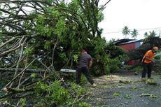Kota Padang Dilanda Hujan Deras dan Puting Beliung, 20 Pohon Tumbang
