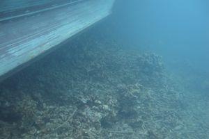 Dua Kapal Ini Bayar Ganti Rugi Rp 35 Miliar ke Indonesia, Apa Sebabnya?