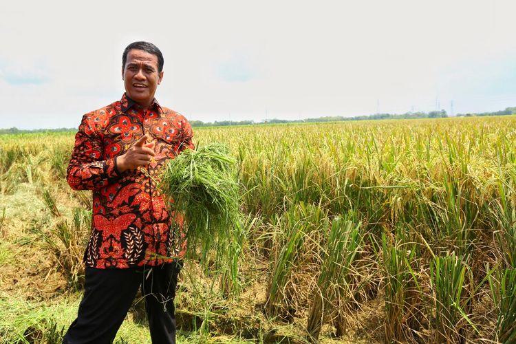 Kementan berhasil mengekspor beras premium ke beberapa negara di saat musim kemarau, seperti Arab Saudi, Amerika Serikat maupun Jepang.