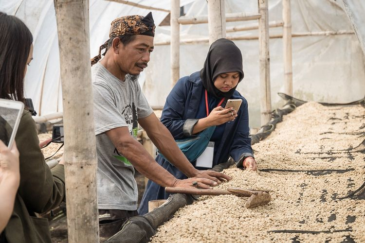 Pengeringan biji kopi