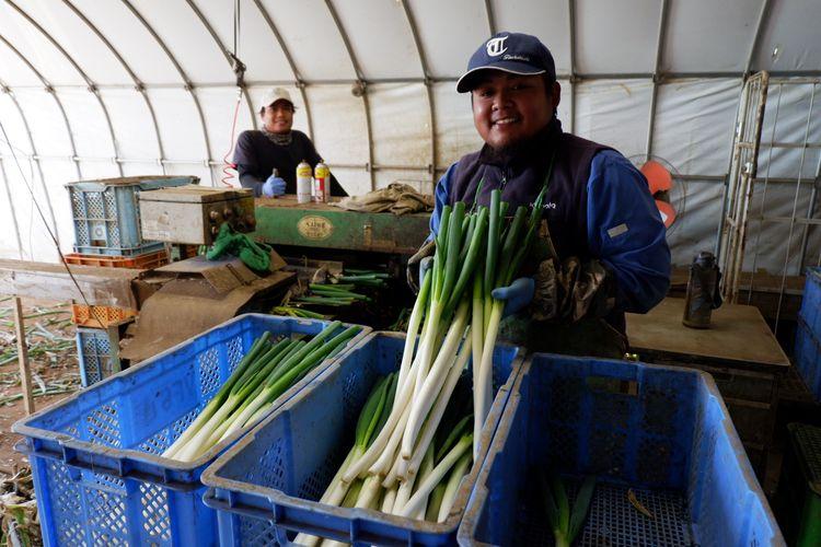 Petani Jepang dan hasil pertanian seperti daun bawang.