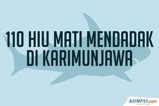 INFOGRAFIK: 110 Ekor Ikan Hiu di Karimunjawa Tewas Mendadak