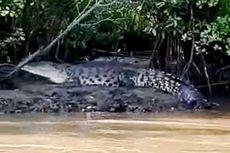 Antisipasi Keselamatan Nelayan dan Wisatawan, Buaya Muara di Nusakambangan Bakal Dievakuasi