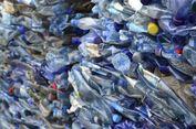 PT. Pelni Investigasi Pembuangan Sampah dari Kapal di Perairan Banda