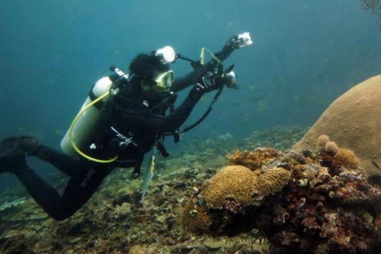 Pemandangan bawah laut Teluk Cenderawasih.