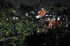 Hujan Deras Disertai Angin Kencang Sebabkan Pohon Tumbang dan Kanopi Ambruk di Kembangan