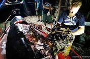 Dari Kresek hingga Karung Beras, Paus di Filipina Telan 40 Kg Plastik