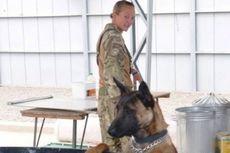 Dua Anjing Pahlawan Militer Ini Selamat dari Eutanasia