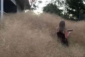 Gulma 'Hairy Panic' Serang Rumah Warga di Wilayah Australia