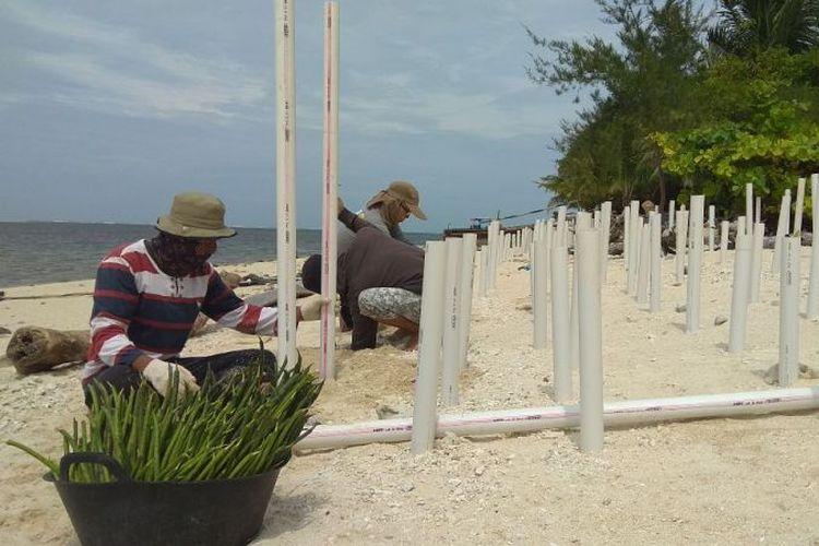 Penanaman mangrove yang dilakukan Komunitas Peduli Mangrove di Pulau Tikus, Bengkulu