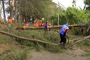 Tabrak Pohon Cemara Tumbang, Warga Banda Aceh Meninggal Dunia