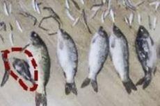 Tangkap Satu Ikan Kecil, Pria di China Dipenjara 3 Tahun