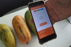 Temuan Mahasiswa, Pepaya Matang Bisa Diukur di Smartphone