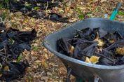 Dalam 2 Hari Puluhan Ribu Kelelawar di Australia Mati, Ini Penyebabnya