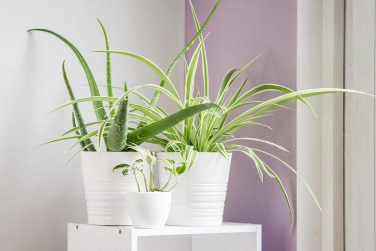 Ilustrasi tanaman di rumah