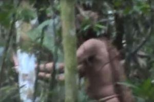 Penyintas Suku Amazon Ini Hidup Sendirian di Hutan Selama 22 Tahun