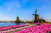 5 Tempat Terbaik untuk Menyaksikan Musim Tulip di Belanda