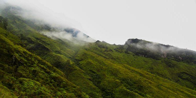 Ilustrasi gunung di musim hujan.