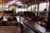 Program Simantri Jadi Andalan Kabupaten Manggarai untuk Petani