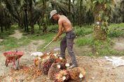 Menko Darmin: Indonesia Siap Lawan Diskriminasi CPO Uni Eropa