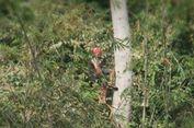 3 Taman Nasional Indonesia Diusulkan Jadi Cagar Biosfer Dunia