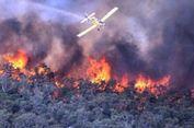 Tak Hanya Gizi, Asap Kebakaran Hutan Juga Sebabkan 'Stunting'