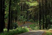 Usai Nyoblos, Kunjungi Wisata Alam di Jabodetabek Ini