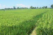Dukungan Ditjen PSP Kementan Majukan Potensi Pertanian Kabupaten Landak