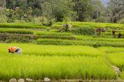 500 Hektar Lahan Sawah di Manggarai Barat Terendam Banjir