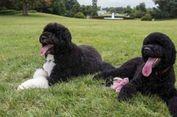 Anjing hingga Sapi, Ini Deretan Hewan Peliharaan Presiden AS di Gedung Putih