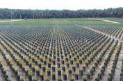Kementerian Pertanian: Lahan Sawit Indonesia Capai 14,03 Juta Hektare