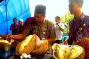 Jangan Kelewatan, Masa Panen Durian Brongkol Tinggal Satu Bulan Lagi