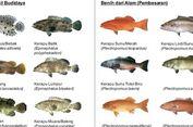 Di Pulau 'Terpadat' di Dunia, Ikan Kerapu Jadi Andalan